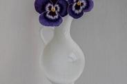 Paarse viooltjes
